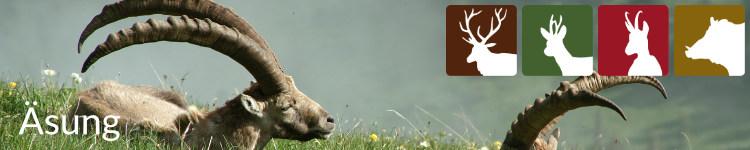 Begriff Äsung in der Jägersprache