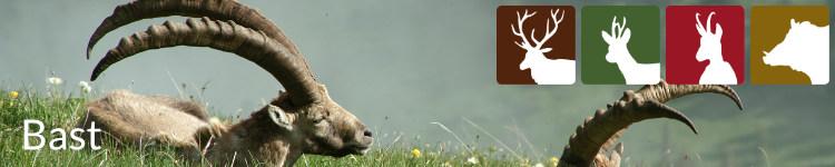 Bast in der Jägersprache