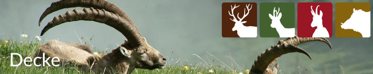 Decke in der Jägersprache