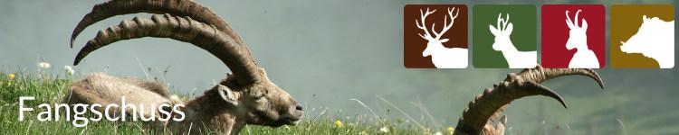 Fangschuss in der Jägersprache