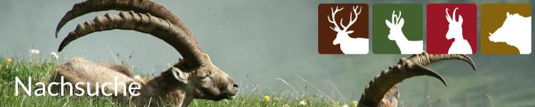 Nachsuche in der Jägersprache