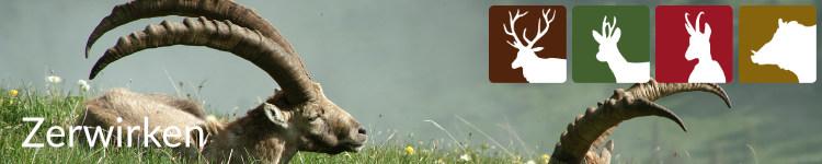Zerwirken in der Jägersprache