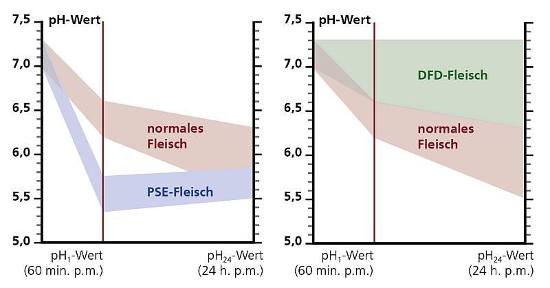 PSE DFD Fleisch pH Werte Tabelle